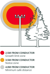 Electrcity safety near trees diagram